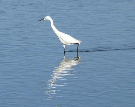 Merveilles de la Baie d'Authie