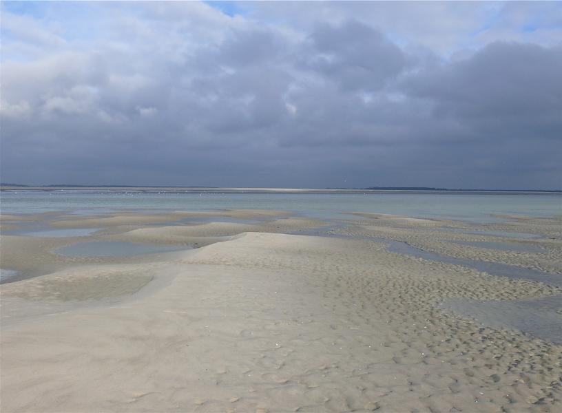 Phoques et grands espaces en Baie de Somme