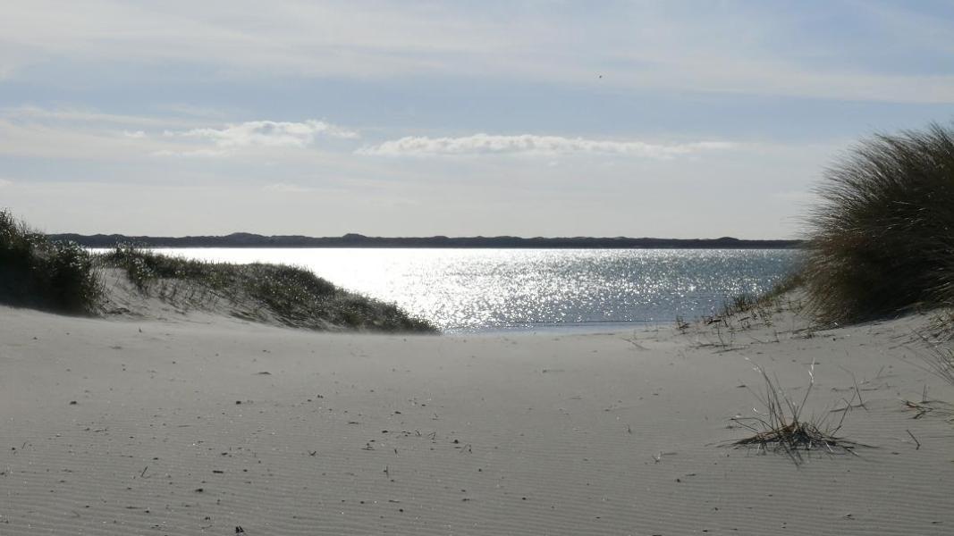 Phoques et splendeurs de la Baie d'Authie